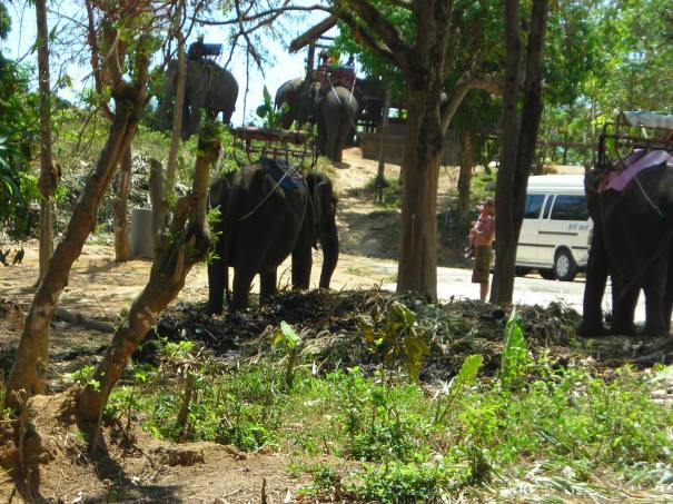 經過大象區