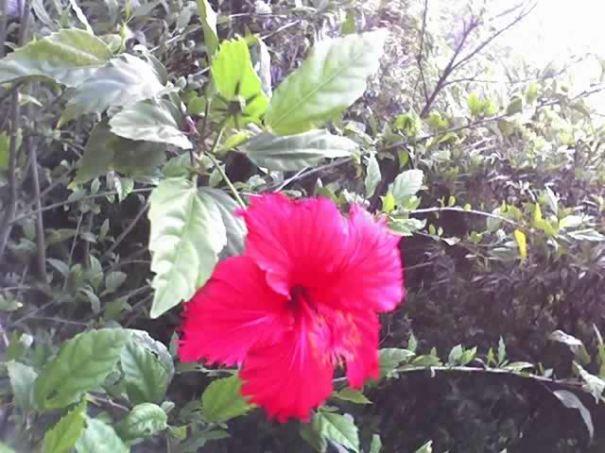 粉紅色的小花