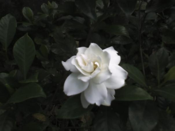 白色小花,很漂亮